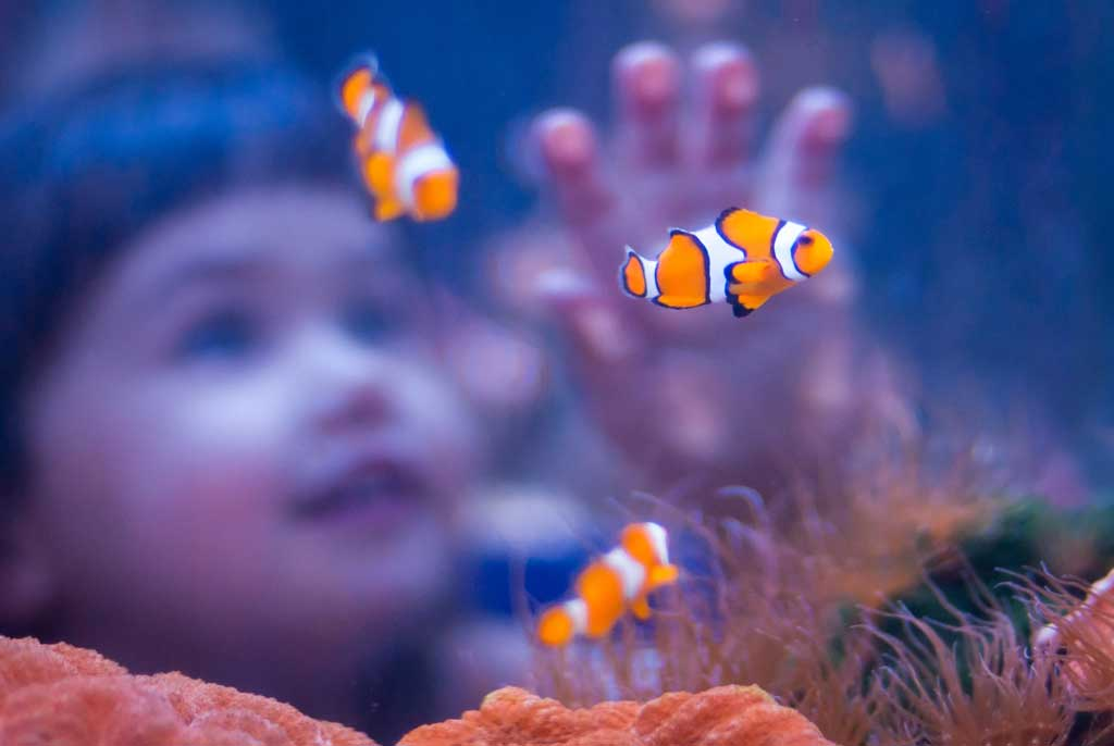 DeZoos acuario pez payaso Clownfish child